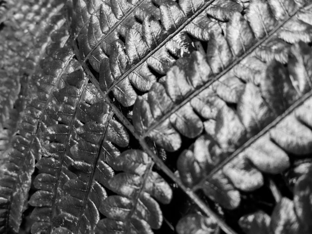 Black & White fine art nature photography - Pennsylvania