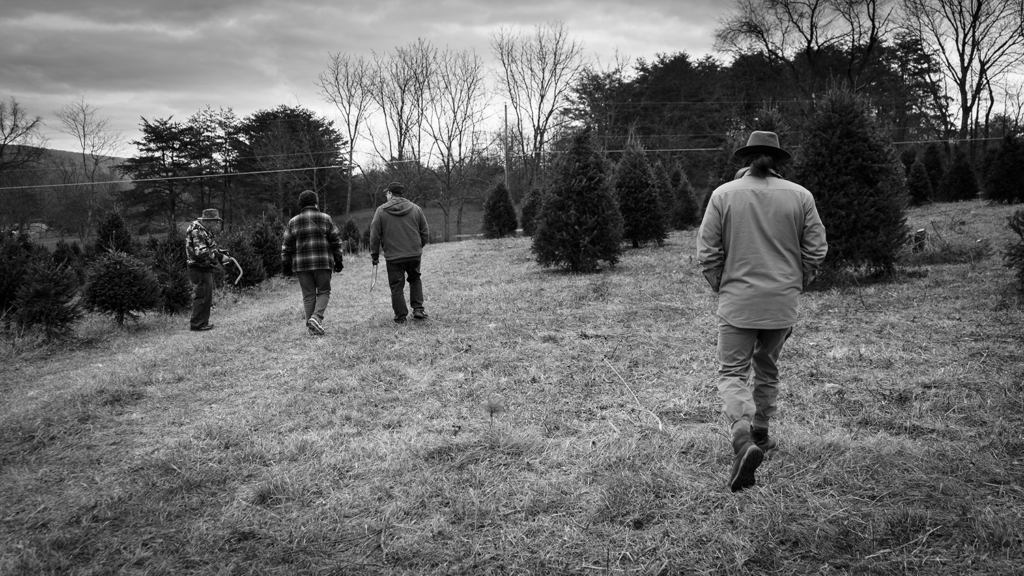 Christmas Tree Farm - Perry County, Pennsylvania - photography