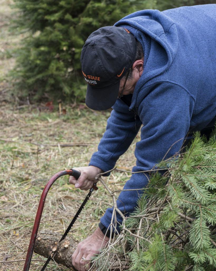 Christmas Tree Farm - Perry County, Pennsylvania - photography