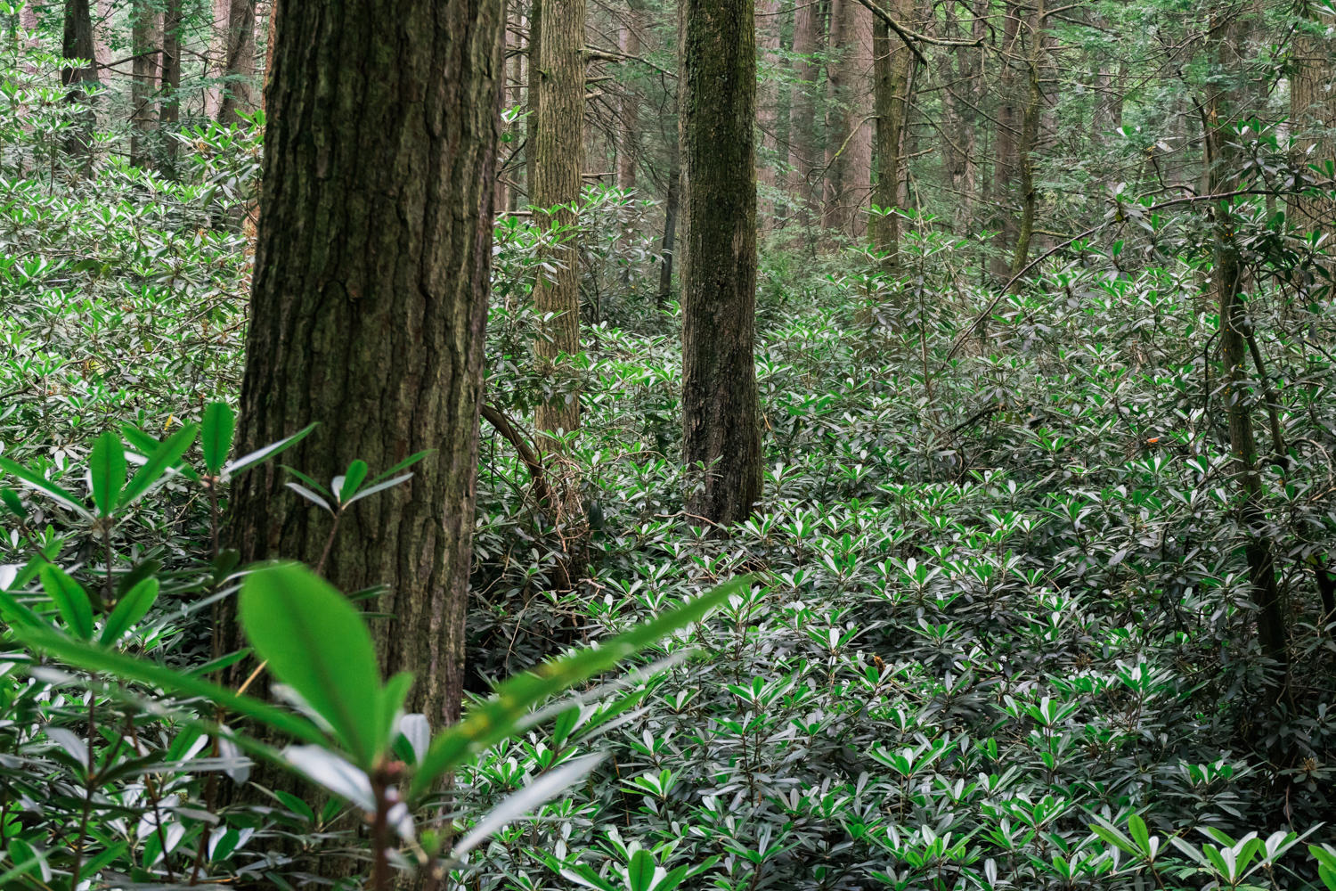 Alan Seeger Natural Area - Rothrock State Forest - Pennsylvania - photography