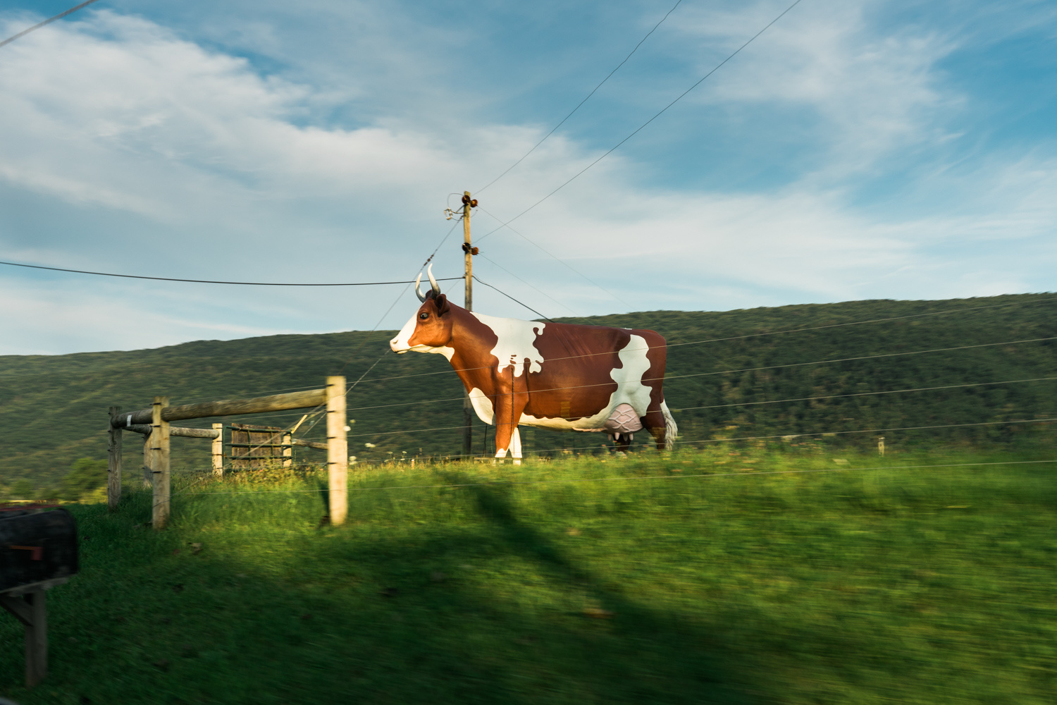 Cow Statue in rural Pennsylvania - travel photography