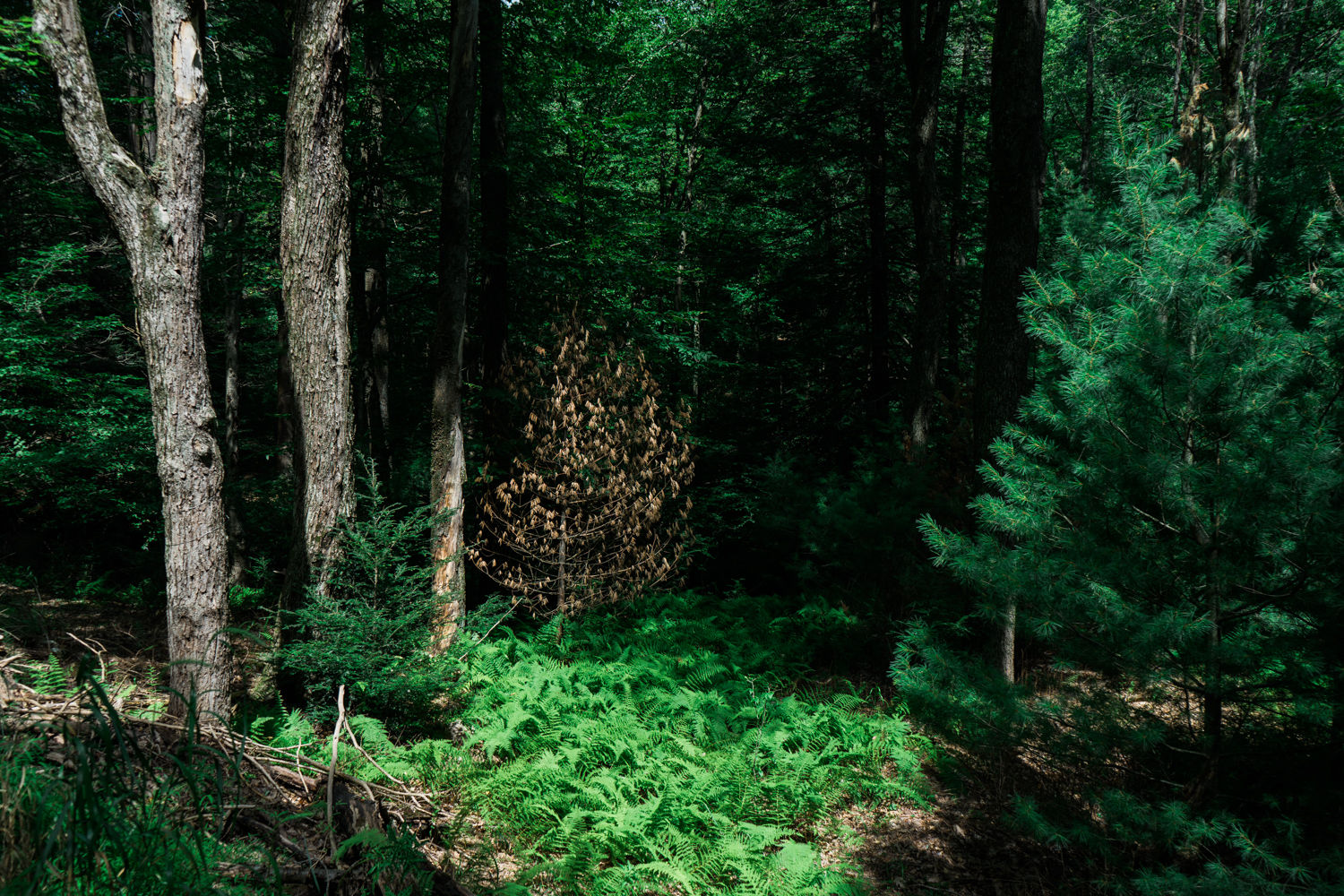 Penn Roosevelt State Park - Rothrock State Forest - Pennsylvania - photography- nature - travel