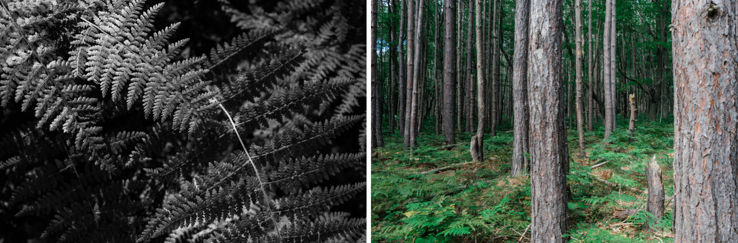 Black Moshannon State Park - Pennsylvania - State College - forest - nature - fine art photography