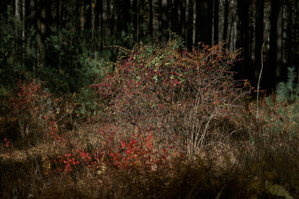 Michaux State Forest - fine art photography - Pennsylvania
