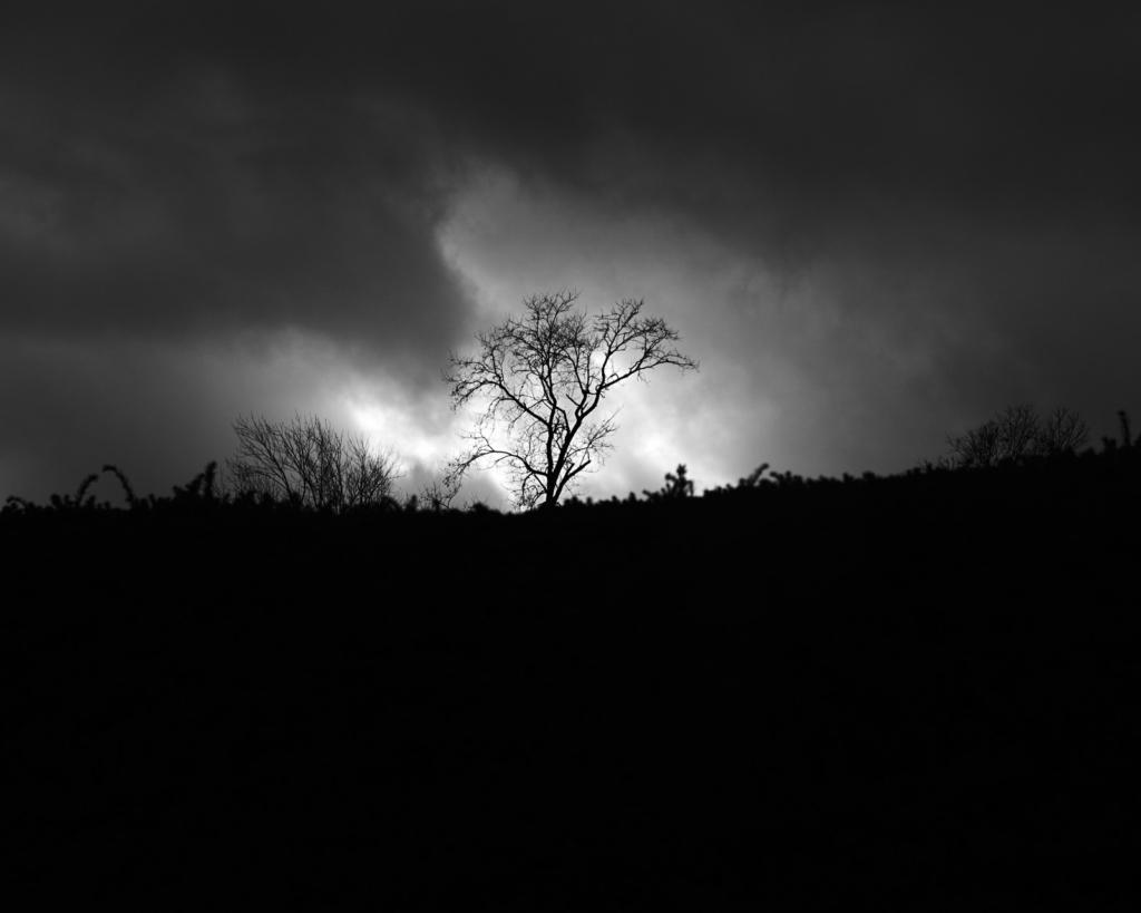 black and white fine art photography, Camp Hill, Pennsylvania, Pa, Harrisburg, nature, sky