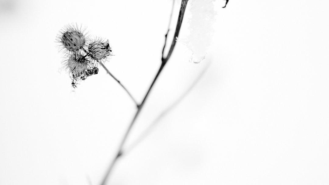 Fine Art Nature Photography - Tuscarora State Forest - Cumberland County - Pennsylvania