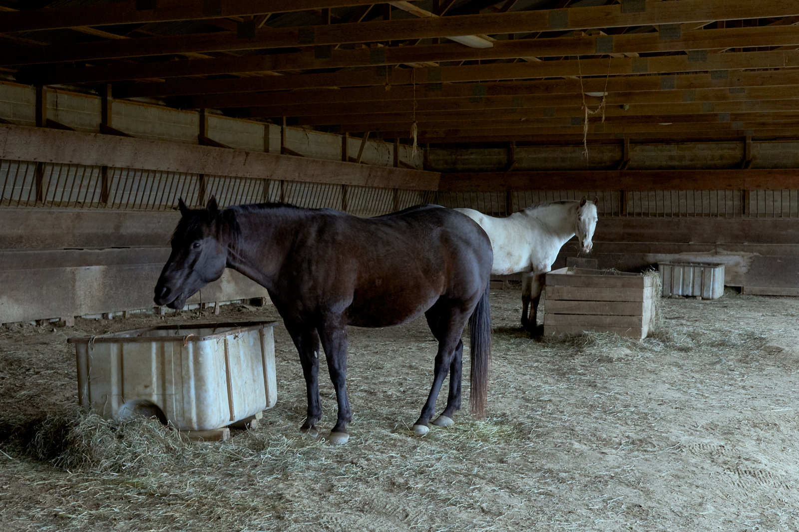 Big Sky Horse Farm, Carlisle, Pennsylvania, Documentary photography