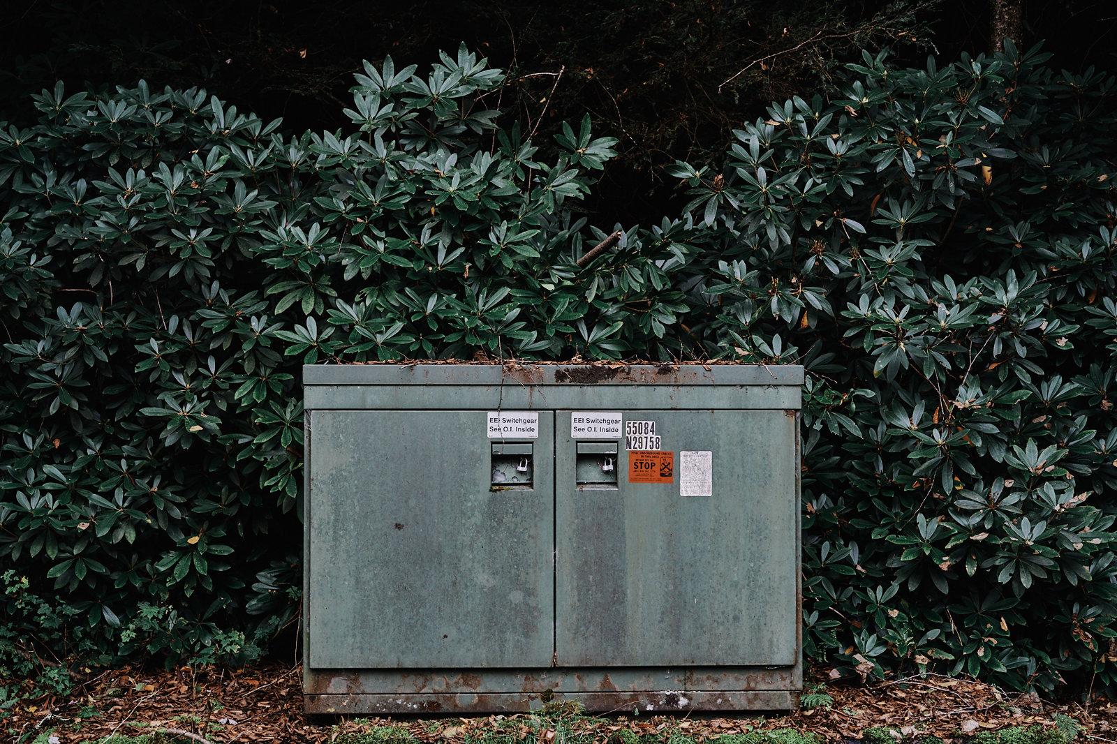 Fine Art Nature Photography - Rhododendron - Poconos - Pennsylvania
